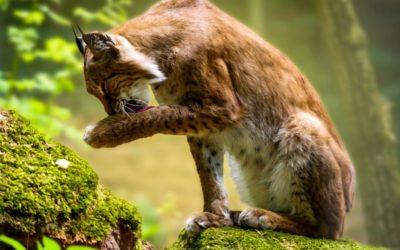 30 let ochrany přírody v Česku: start z nuly se podařil, přibývají ale nové hrozby