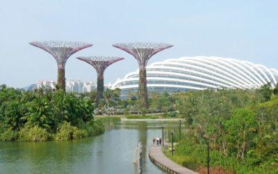 Jak bojovat s vedrem: Singapur zkouší zatravnit i střechy autobusů